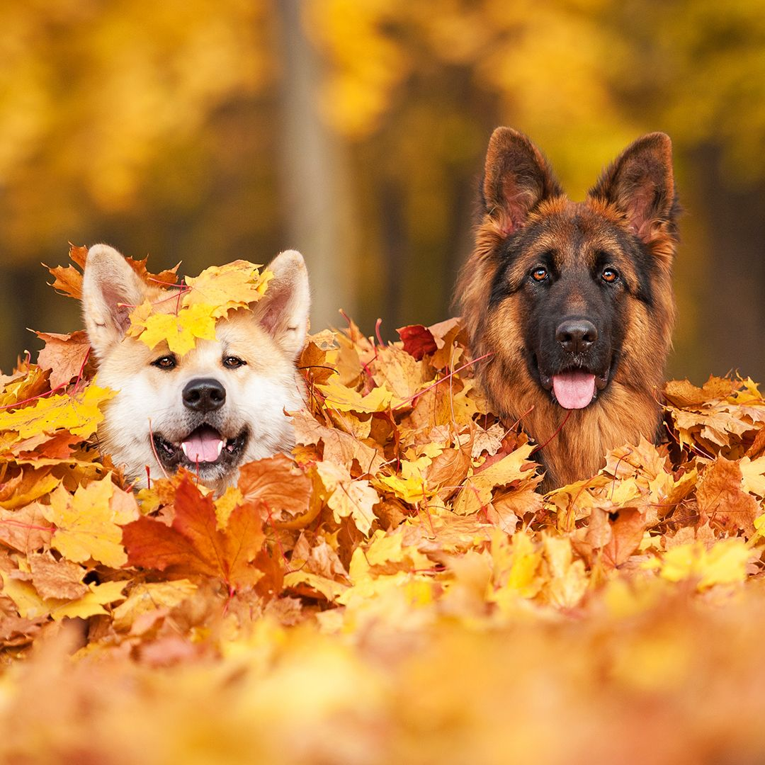 6 great days out for dogs this autumn