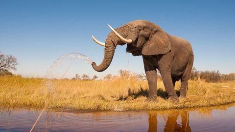 Slimme olifant
