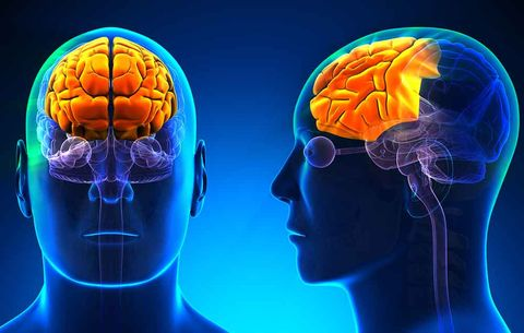 men's brains shrink in different areas