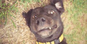 honden-bijten-voorkomen
