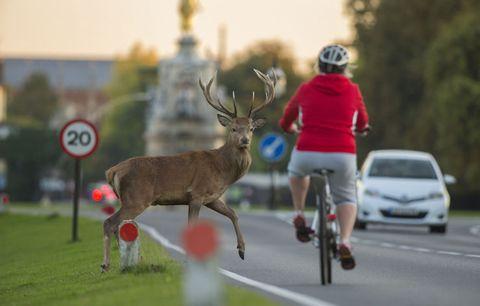 deer bike