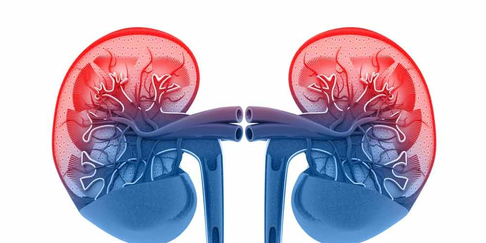 Why You Definitely Want To Keep Your Kidneys Happy—And 4 Easy Ways To Do It