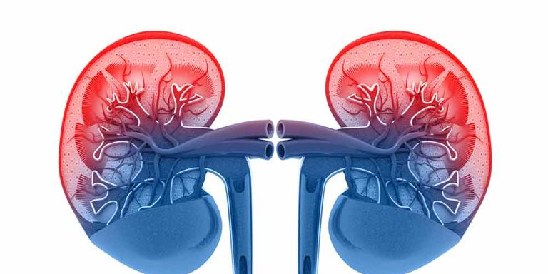 Why You Definitely Want To Keep Your Kidneys Happyand 4 Easy Ways