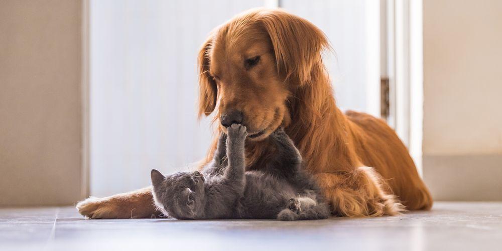 populairste-honden-en-katten-namen
