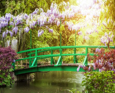 Monet's garden 2020