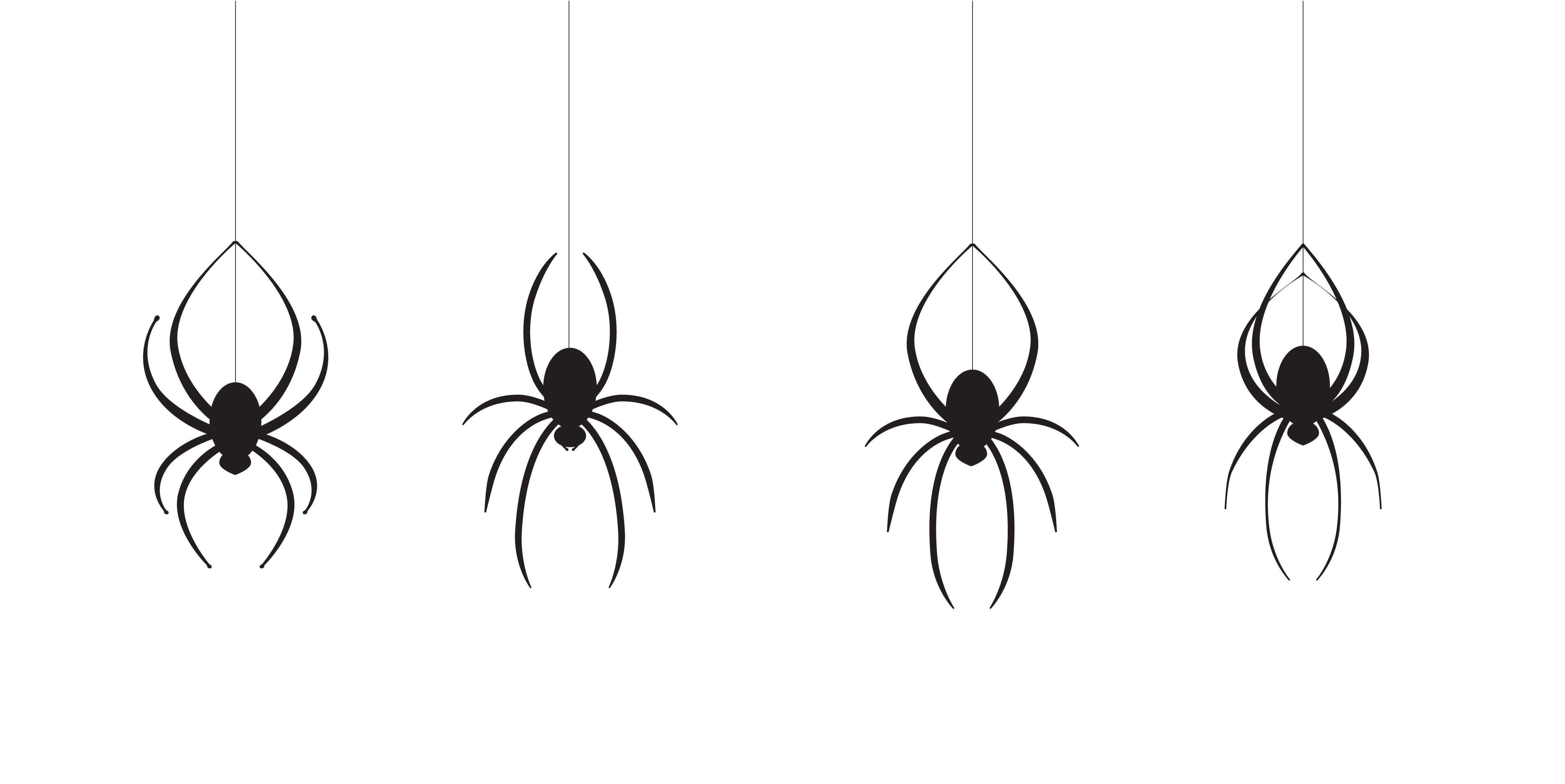 bang-voor-spinnen