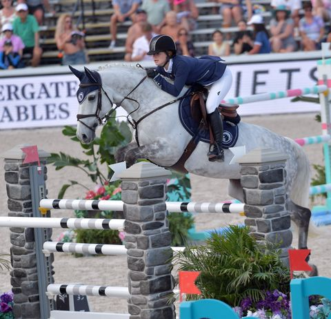 Horse, Show jumping, Equestrianism, Animal sports, Sports, Bridle, Eventing, Equestrian, English riding, Halter,