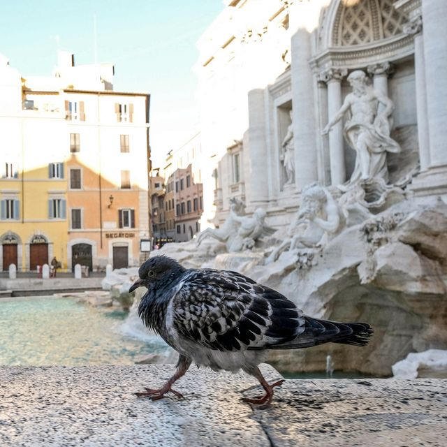Pigeons and doves, Bird, Human settlement, Architecture, Town, Water, City, Town square, Tourism, Tree,