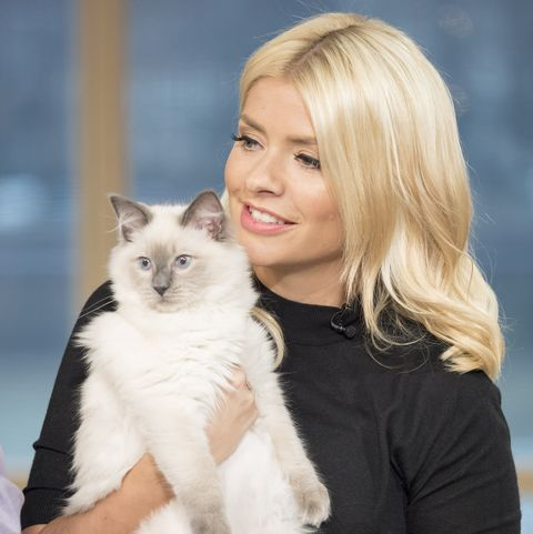 Holly Willoughby proves she is the ultimate cat mum