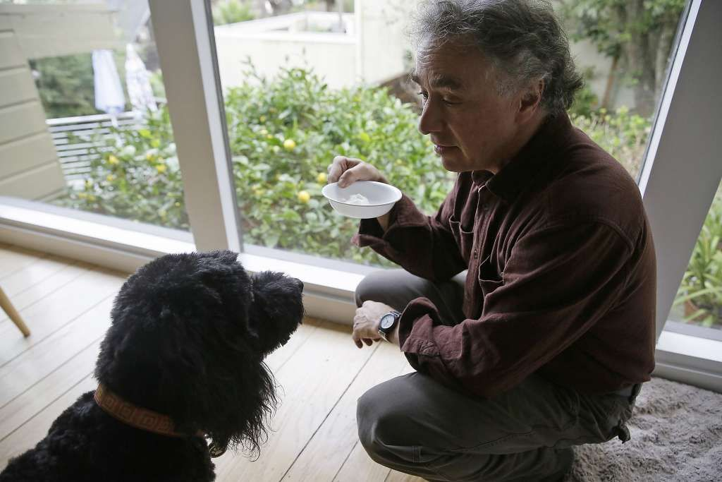 Michael Fasman feeds his 12-year-old dog, Hudson, with a yogurt containing cannabis tincture at his home in San Francisco.