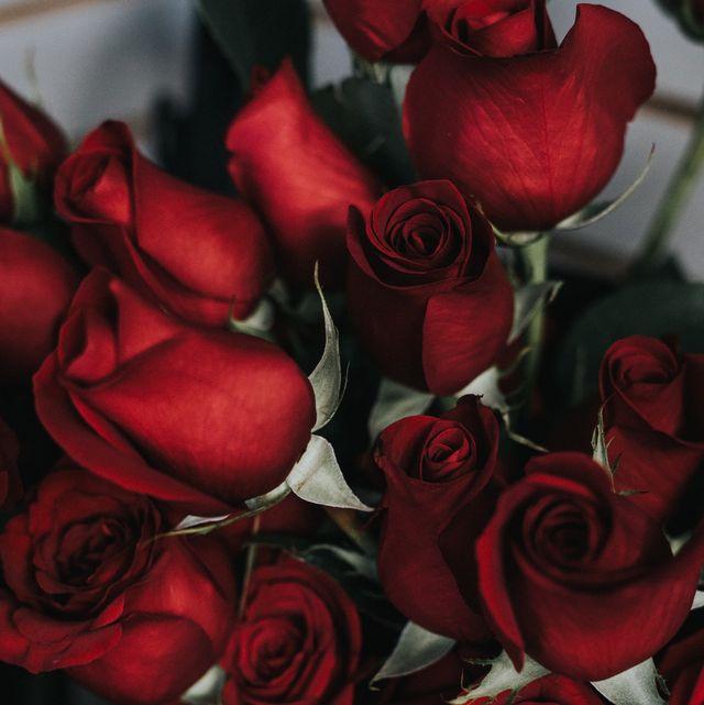Garden roses, Red, Rose, Flower, Cut flowers, Floribunda, Petal, Rose family, Still life photography, Plant,
