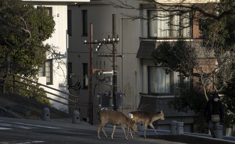 Animals taking over deserted cities during coronavirus