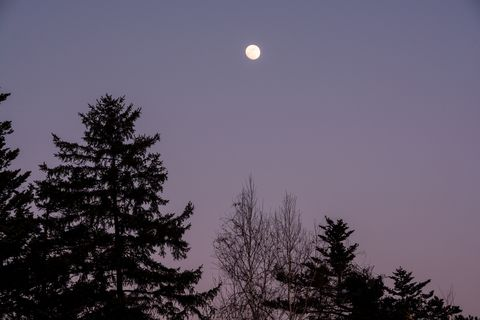 silhouette of larch and full moon