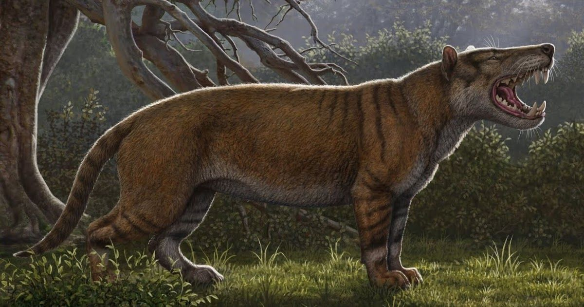 Scientists Discover Gigantic Prehistoric Cat In A Neglected Museum Drawer