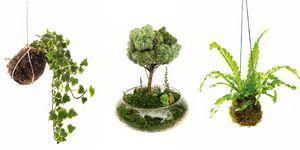 Plantas en Kokedama