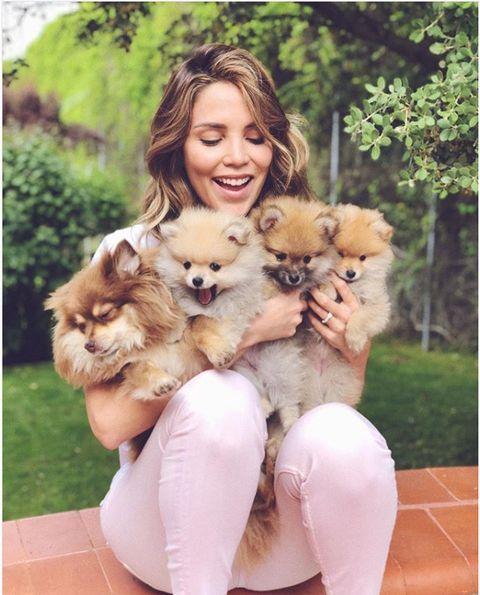 Dog, Mammal, Canidae, Pomeranian, Companion dog, Spitz, German spitz, Dog breed, Carnivore, Puppy love,