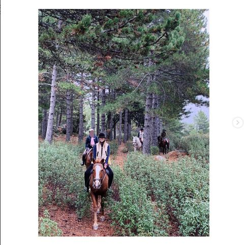 Horse, Trail riding, Tree, Natural environment, Forest, Trail, Woodland, Bridle, Recreation, Equestrianism,