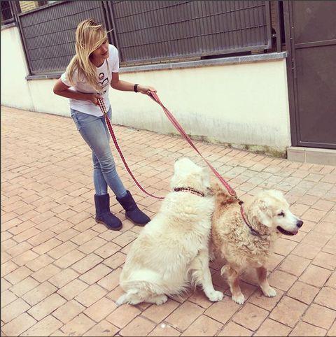 Mammal, Vertebrate, Dog, Canidae, Leash, Dog walking, Dog breed, Carnivore, Companion dog, Golden retriever,