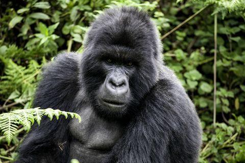 Mammal, Vertebrate, Primate, Terrestrial animal, Nature reserve, Vegetation, Leaf, Organism, Snout, Wildlife,