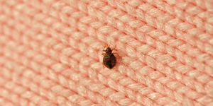 most effective bed bug treatment