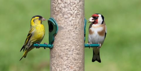 birds on seed feeder