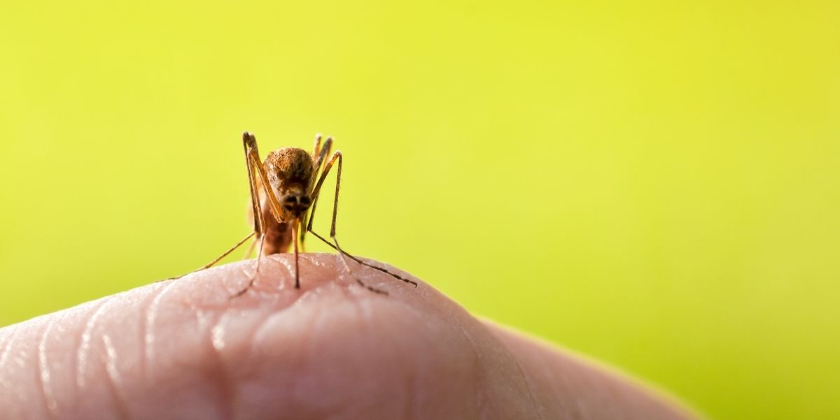 The Top 50 Mosquito-Infested Cities in the U.S. Will Probably Surprise You