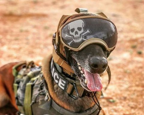 Soldier, Snout, Personal protective equipment, Canidae, Helmet, Military camouflage, Military, Army, Infantry, Dog breed,