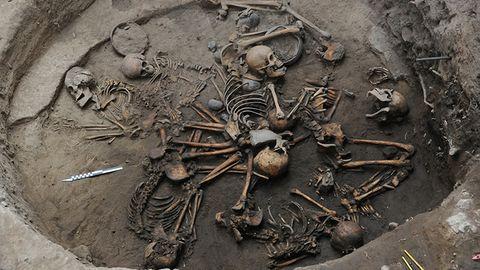 Skeleton, Anthropology, Skull, Bone, Fossil, Metal,