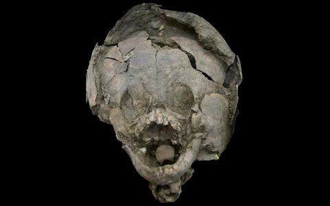 Skull, Head, Bone, Jaw, Human, Fossil, Skeleton, Artifact, Rock,