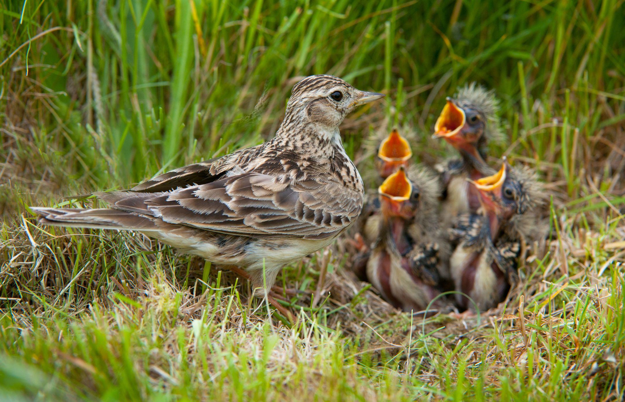 7 simple ways to help nesting birds in your garden