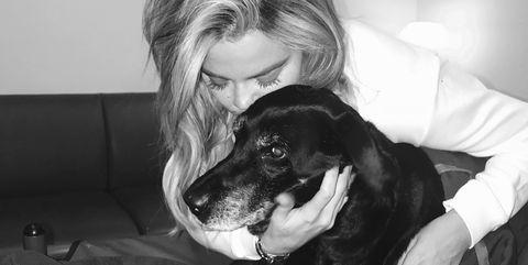 Canidae, Dog, Black-and-white, Dog breed, Carnivore, Companion dog, Monochrome, Style,