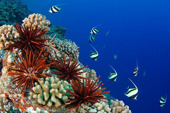 Hawaii Bans Sunscreens That Hurt Coral Reefs