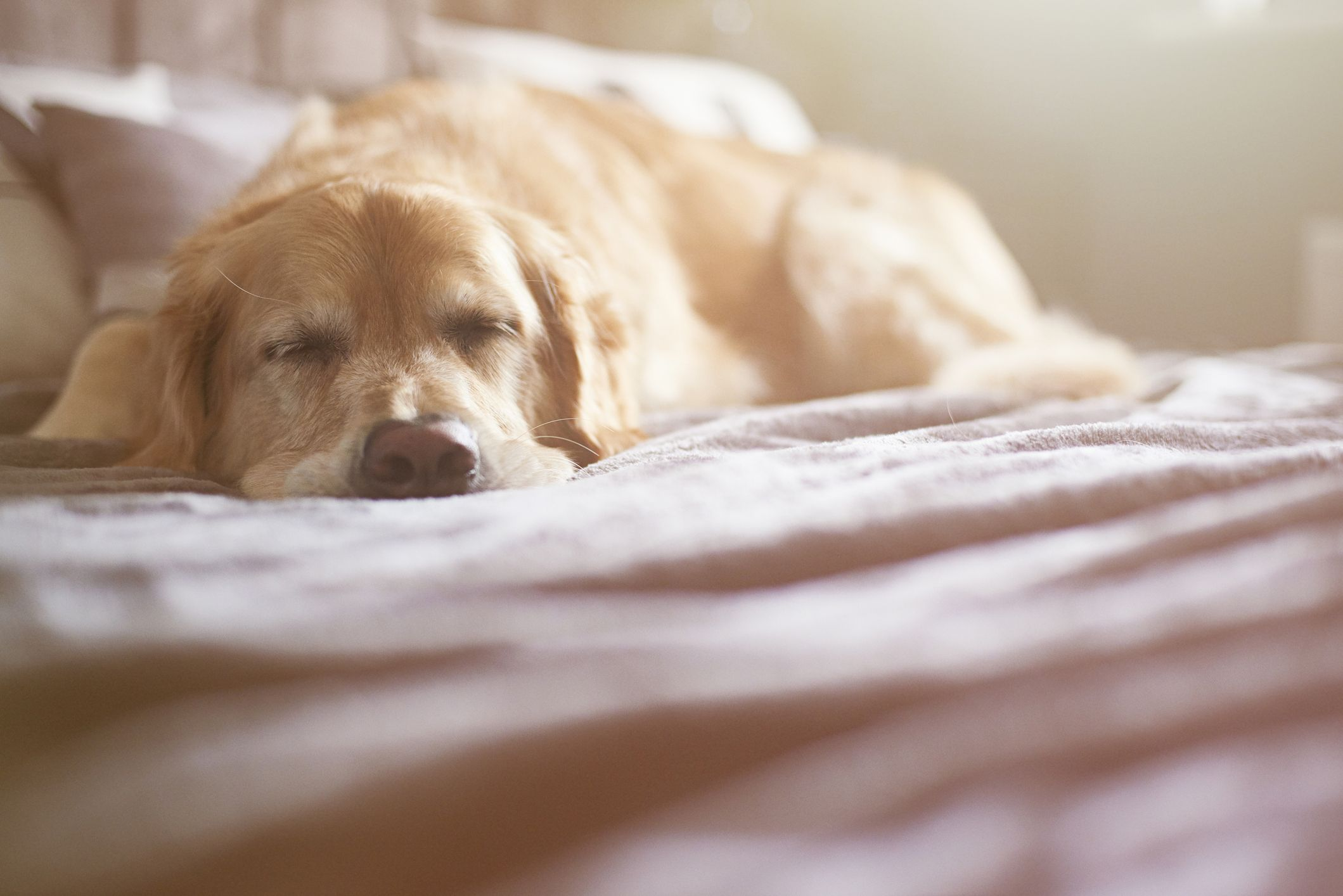 Sleeping with your dog in the room can improve your health, new study finds