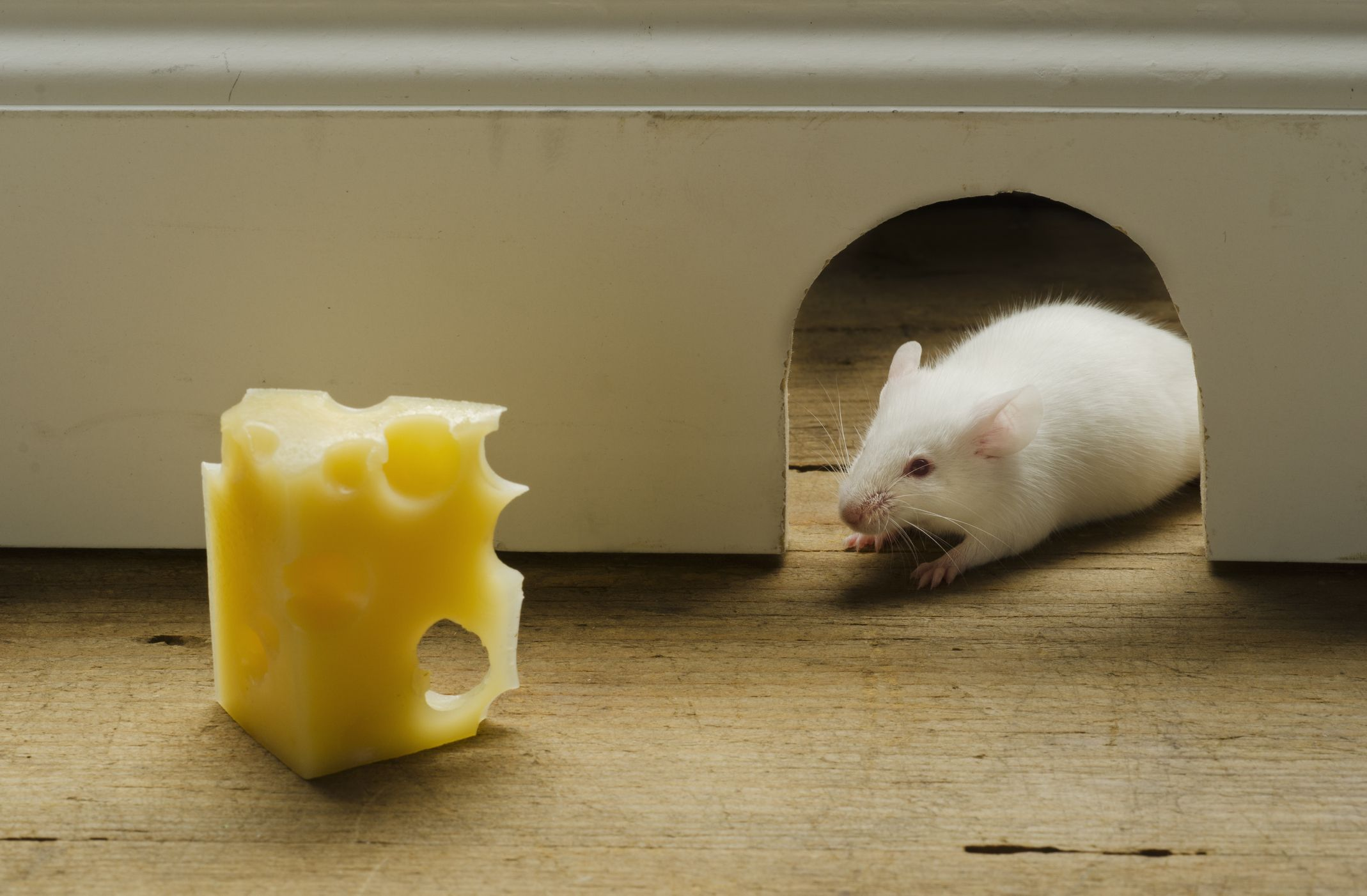 How to Get Rid of Mice: The Ultimate Guide to a Rodent-Free Home