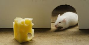 Slice of cheese in front of mouse hole, studio shot