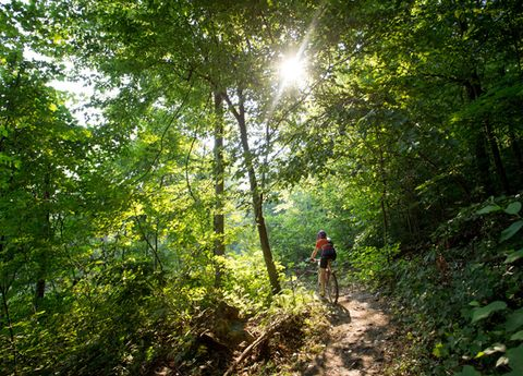 Vegetation, Natural environment, Plant community, Sun, Tree, Forest, Mountain biking, Trail, Sunlight, People in nature,