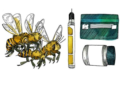 Invertebrate, Insect, Pest, Pollinator, Arthropod, Bee, Honeybee, Membrane-winged insect, wasp, Artwork,