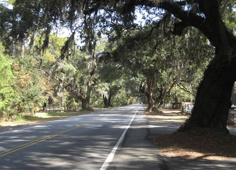 Road, Infrastructure, Road surface, Asphalt, Sunlight, Woody plant, Thoroughfare, Trunk, Shade, Tar,