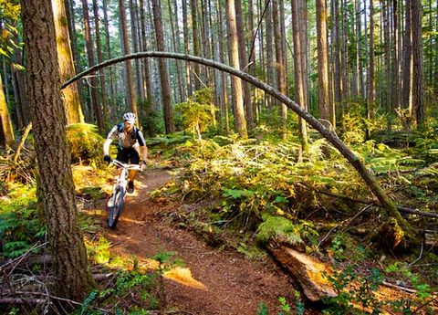 Bicycle frame, Bicycle wheel, Mountain bike, Natural environment, Plant, Mountain biking, Downhill mountain biking, Sports equipment, Bicycle helmet, Cross-country cycling,