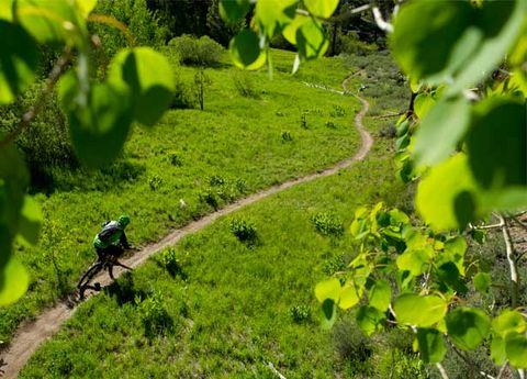 Vegetation, Plant community, Bicycle clothing, Bicycles--Equipment and supplies, Mountain bike, Bicycle frame, Soil, Helmet, Bicycle helmet, Agriculture,