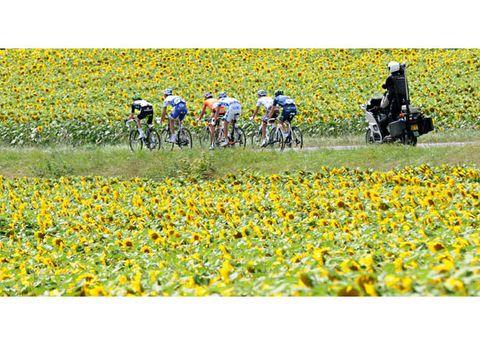 Human, Yellow, Bicycles--Equipment and supplies, Flower, Helmet, Bicycle clothing, Field, Bicycle helmet, Bicycle handlebar, Agriculture,