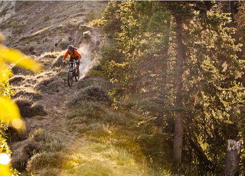 Mountain biking, Downhill mountain biking, Plant community, Mountain bike, Bicycle frame, Bicycle, Outdoor recreation, Cycle sport, Soil, Endurance sports,
