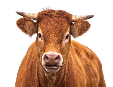 1-beef.jpg