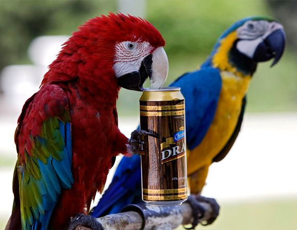 7 Glorious Times Scientists Got Animals Drunk