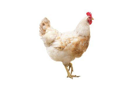 2 chicken.jpg