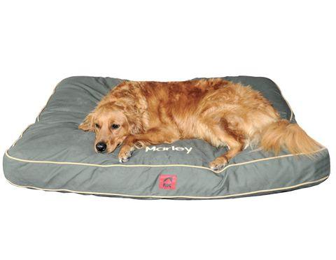 2-dog-bed.jpg
