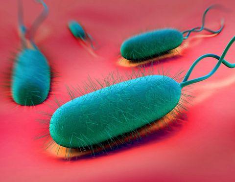 4-bacteria.jpg