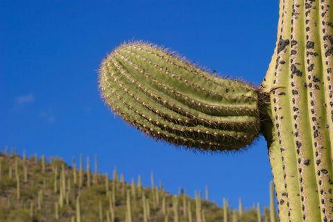 cactus small.jpg