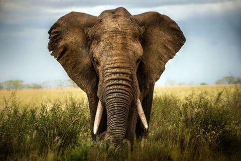 sex-positions-elephant.jpg