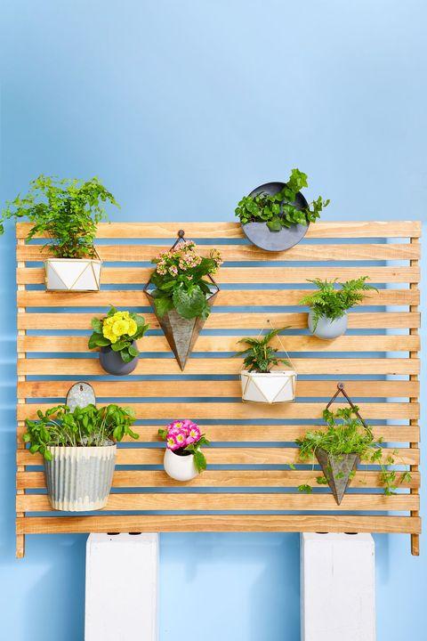 small backyard ideas  plant wall